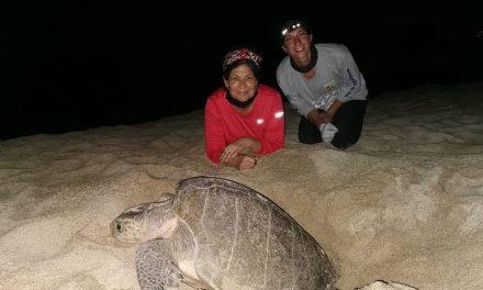 Avistamiento de tortugas, nuevo atractivo turístico en Los Cabos