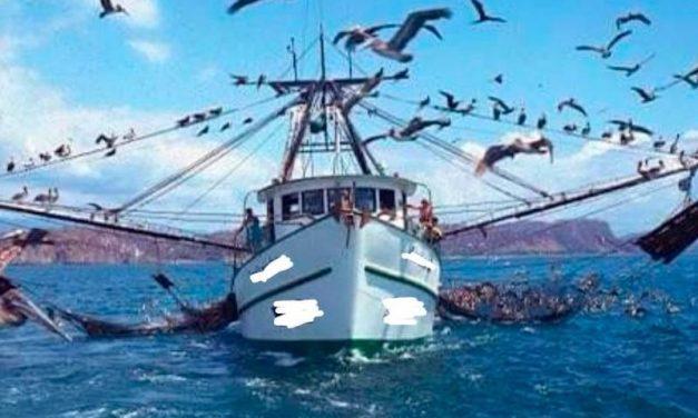 Con descaro, saqueo de los recursos marinos en costas de BCS
